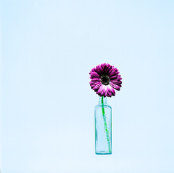 FlowerCol001