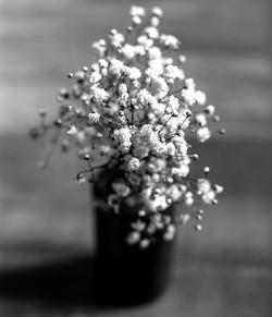 Flowers011