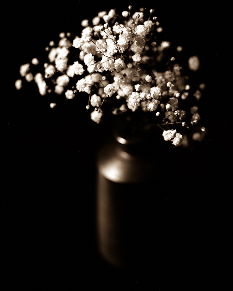 Flowers54010