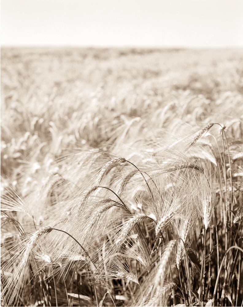 wheat4x52019-0004
