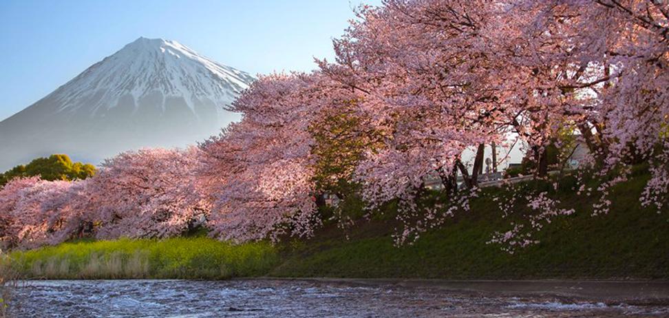 photographe-beaute-cerisiers-japon-1.png