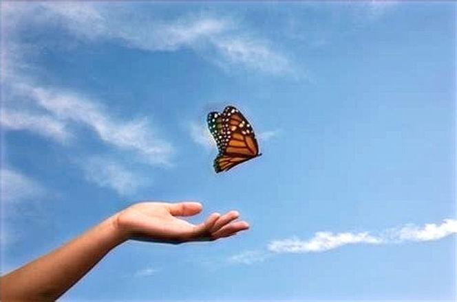 papillon_edited.jpg