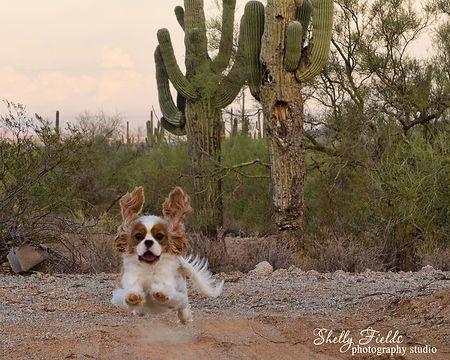 Cavalier in the desert