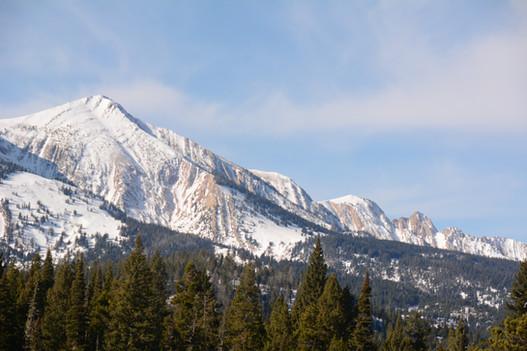 Bridger Mountain Range - Pryor Mountains - George Wuerthner