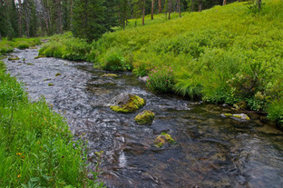 Gallatin Range Creek - Howie Wolke