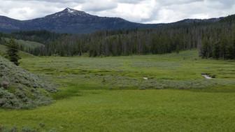 Buffalohorn Creek Drainage - George Wuerthner