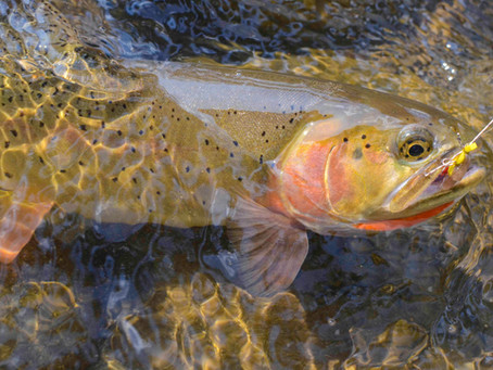 Announcing the Gallatin-yellowstone Wilderness Act