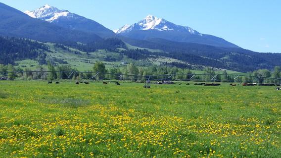 Paradise Valley Montana - George Wuerthner
