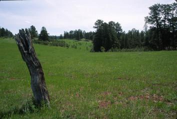 Meadow by Poker Jim Lookout, Ashland Dis