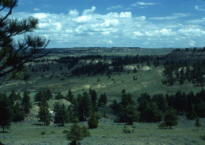 Horse Creek and Ponderosa Pine, Ashland