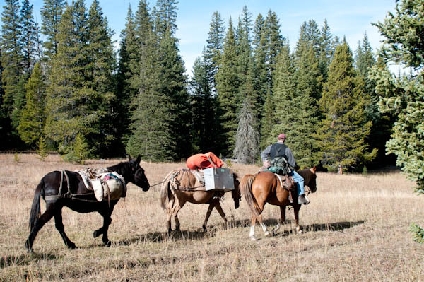 Horsepacking near Indian Peaks - George Wuerthner