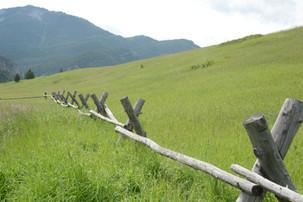 Indian Ridge Trail - George Wuerthner