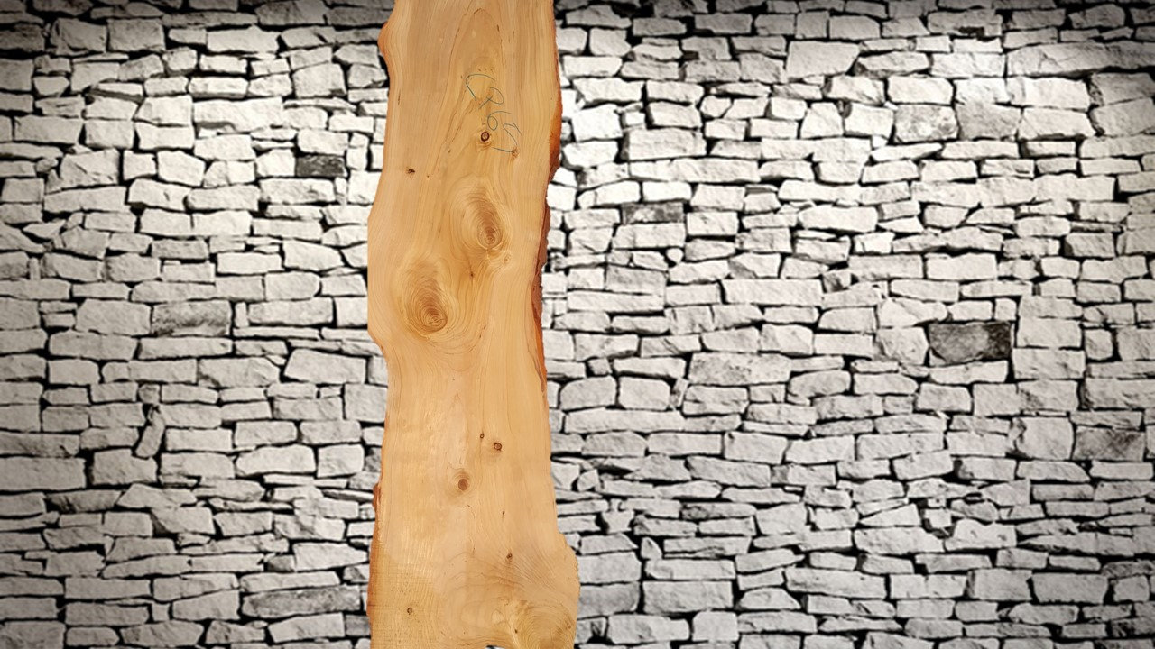 1- Cedro del Libano.jpg