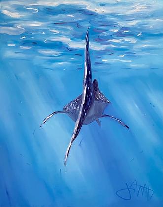 Moving Past - Whale Sharks Ningaloo