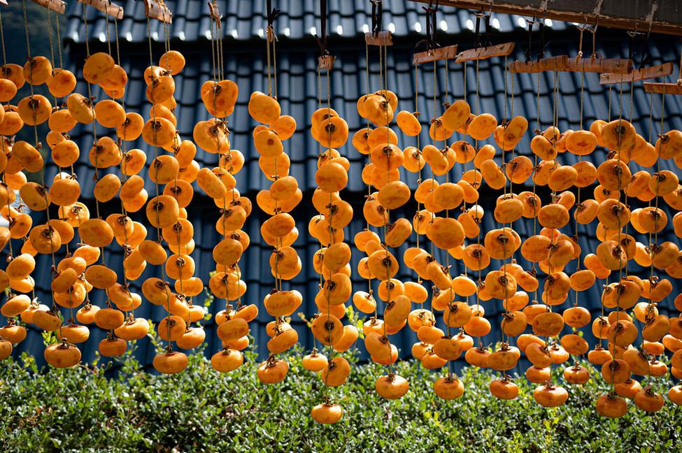 串柿の里・かつらぎ町