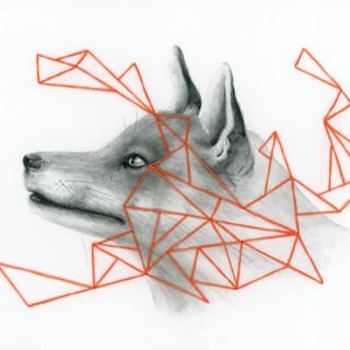 Fox and Orange