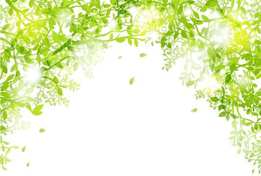 春緑素材写真.jpg