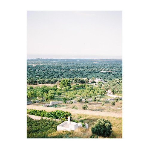 View with Olive Tree fields