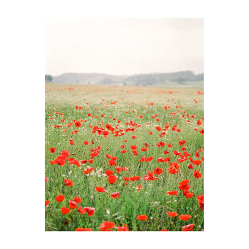Field of Poppies - No. 02