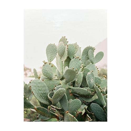 Sicilian prickly pears - No. 02