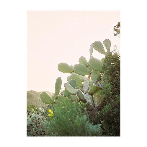 Sicilian prickly pears - No. 01