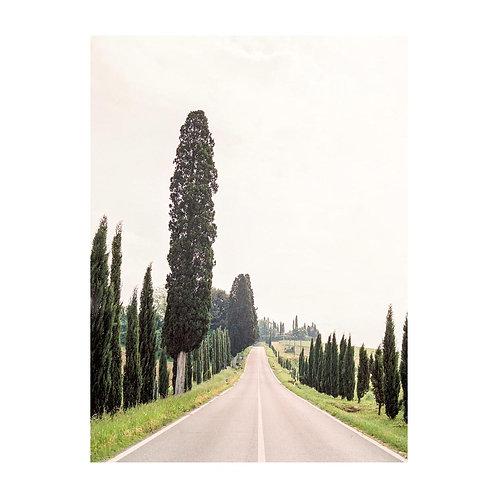 Tuscan Cypress Road