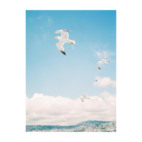 Seagulls - No 01