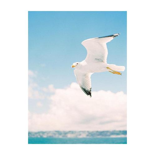 Seagulls - No 02