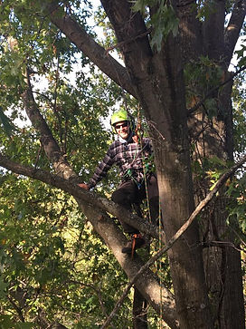 Ripley Tree Service, Comprehensive Tree Management