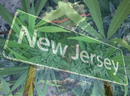 iAnthus, Columbia Care, and Verano Receive Permit to Begin Cultivation in New Jersey