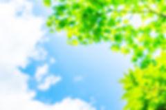 新緑と青空01.jpg