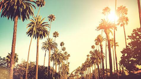 palm-trees-a100e7ee 2.JPG