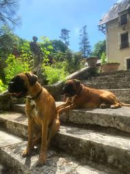 parc-de-lesseps-chiens.jpg