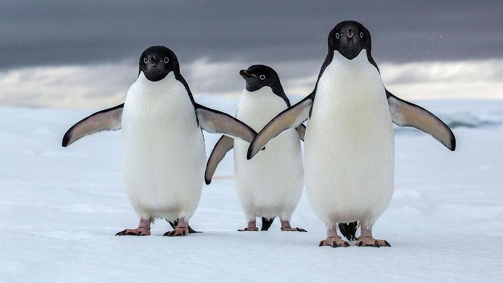 Antarctic Circle Expedition - 14 Days