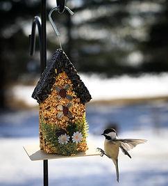 nuckelberry bird feeders.jpg