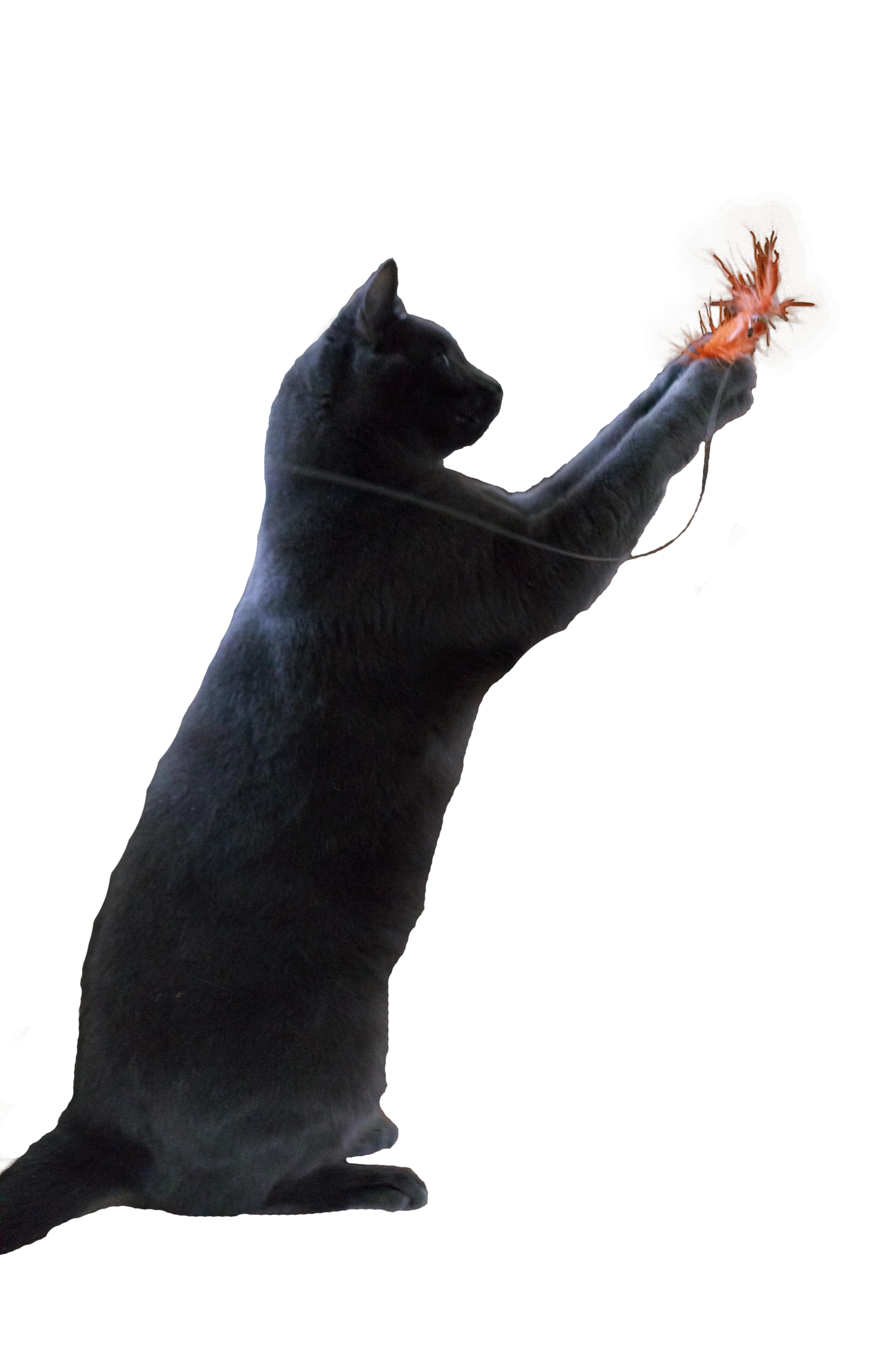 Go Cat