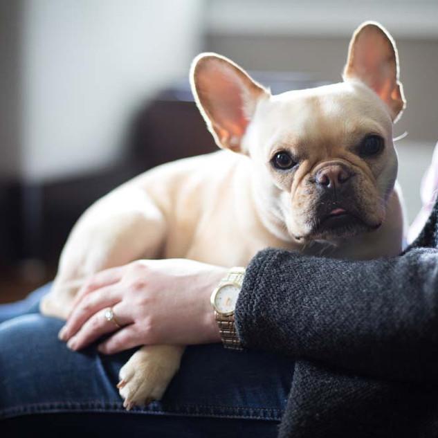 French-Bulldog.jpg