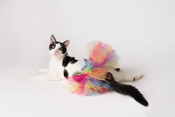 KittyInTutu