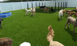medium-PetSuites-outdoor-group-of-dog-friends