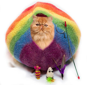 RainbowCatCave_edited.jpg