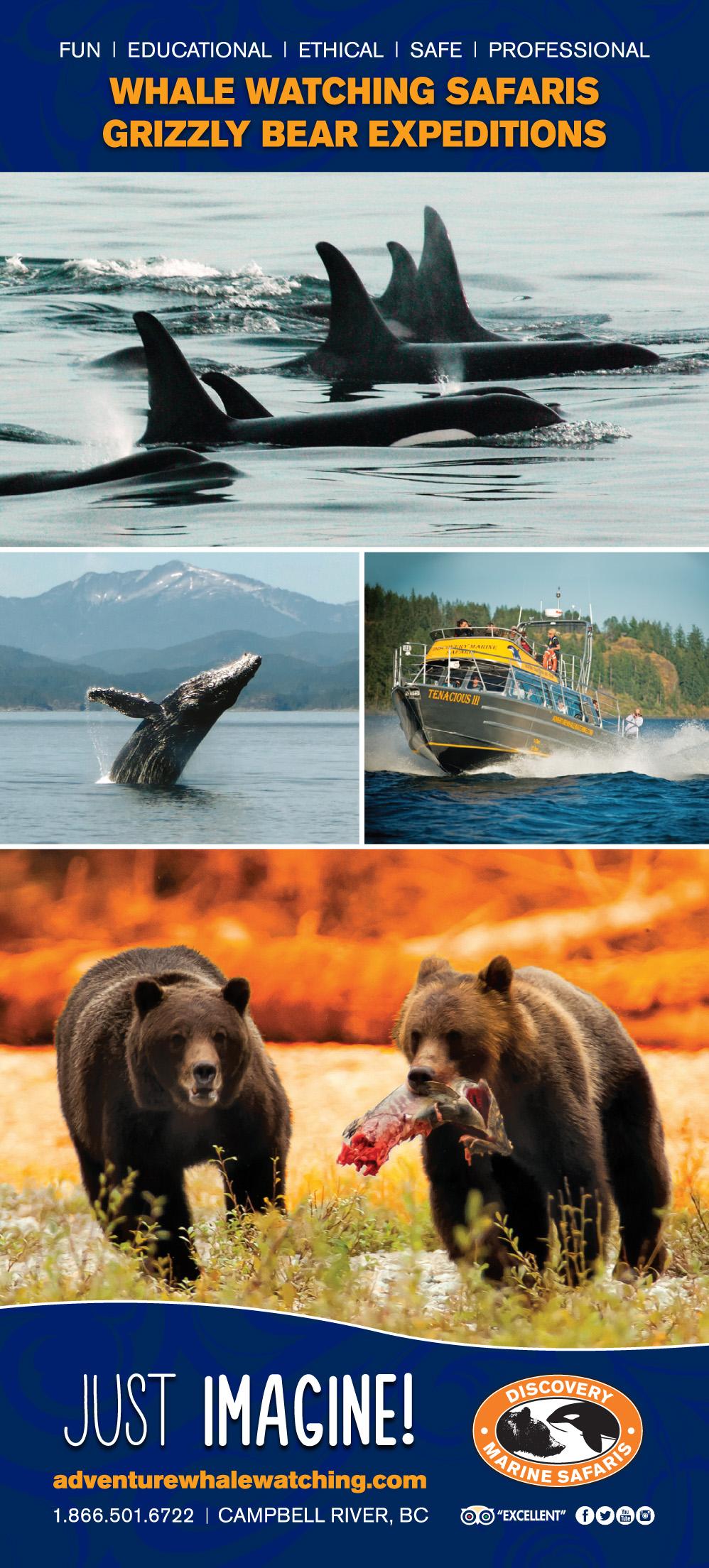 Discovery Marine Safari Ad 2019