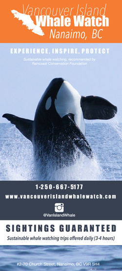 Vancouver Island Whale Watching