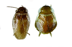 Cockroaches.png