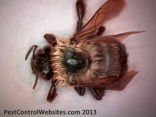 Bumble Bees.jpg