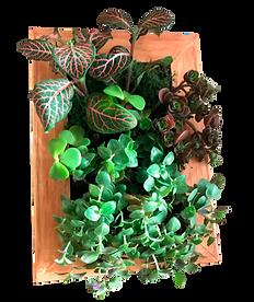 Succ.Plantasverdes1.png