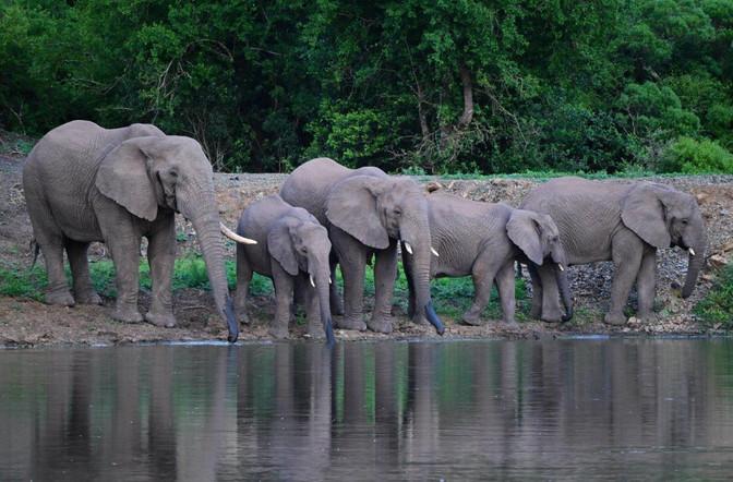 Thula Thula Wildlife Photography Course