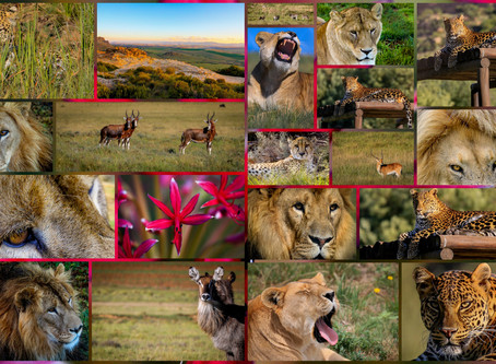 Lions Rock Photography Course          22 – 27 September 2019