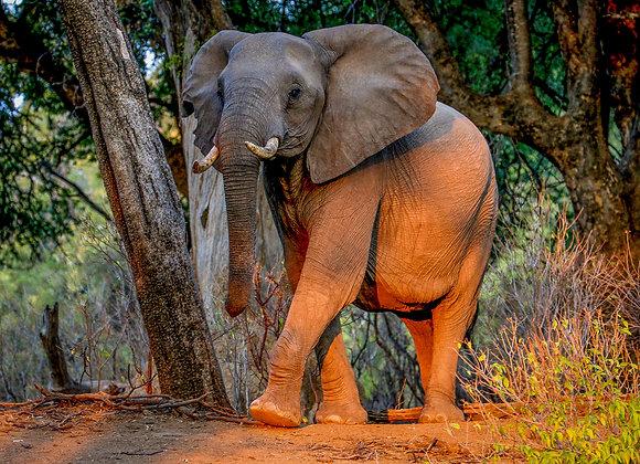 Elephant of Botswana Koro Rover & Island Camp I