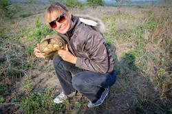 Tortoise 9 Sep 2015-6