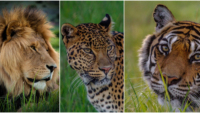 Get 15% of your extended stay ~ LIONSROCK Photography courses     25-30 April & 16-21 October 2020